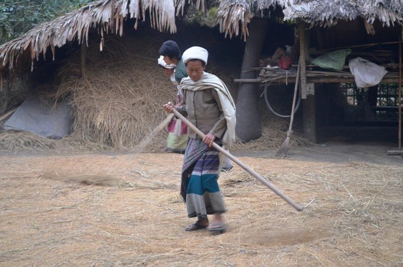 a phakiyal lady threshing rice grains